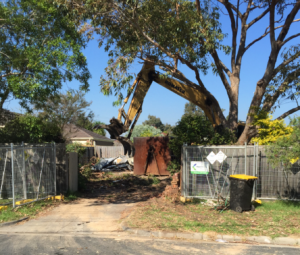 land clearing Telopea